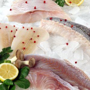 5 versch. Sorten Frischfisch nach Fang
